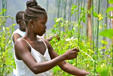 Young woman in greenhouse farm, Kenya
